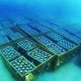海底のワイン